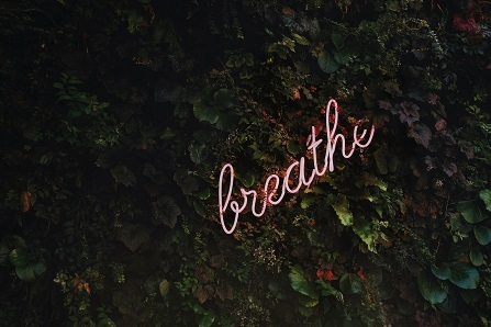 """The word """"breathe"""" appears in neon pink letters on top of green leaves"""